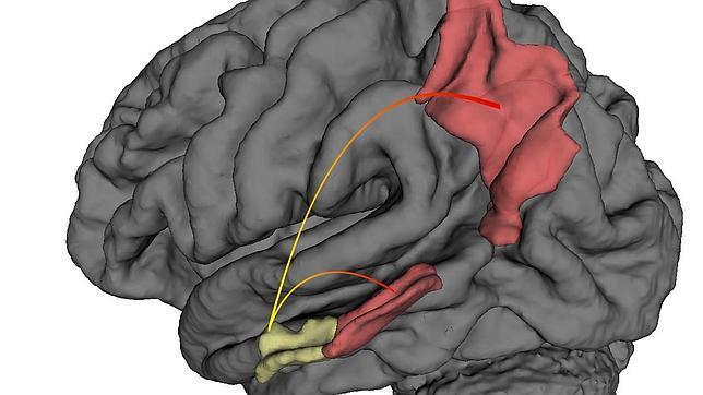 cerebro-alzheimer--644x362